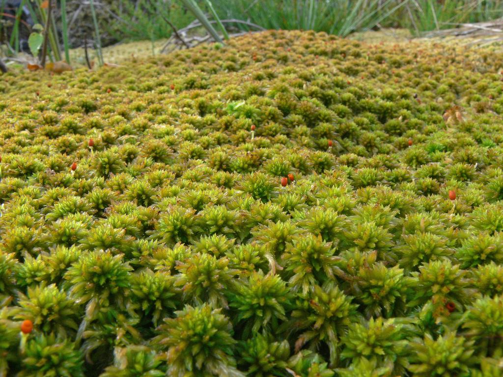 сфагновый мох фото насадки буровые механизмы